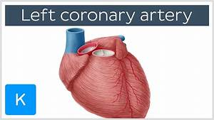 Left Coronary Artery - Function And Diagram