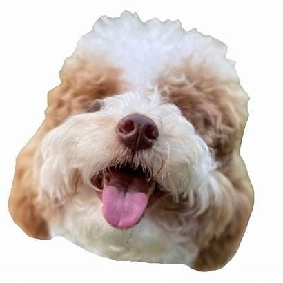 Dog Happy Giphy Sticker Puppy