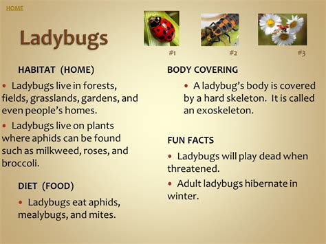 insect fact file ants bumble bees dragonflies ladybugs 651 | HOME Ladybugs. %231. %232. %233. Habitat %28home%29 Body covering. Ladybugs live in forests%2C fields%2C grasslands%2C gardens%2C and even people%E2%80%99s homes.
