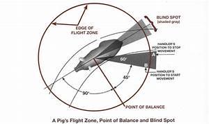 Blind Spot  U00ab Low Stress Pig Handling
