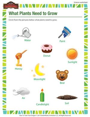 what plants need to grow 1st grade science worksheets sod