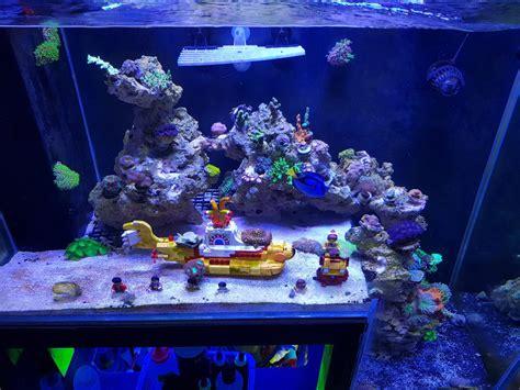 Reef Aquarium From Malaysia Under Orphek Led Aquarium