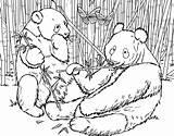 Coloring Panda Urs Bamboo Colorat Ausmalbilder Giant Bear Habitat Eating Planse Animal Kolorowanki Bears Desene Dzieci Colouring Dla Fu Kung sketch template