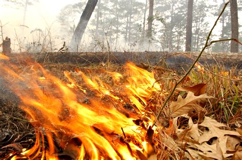Why Burning Leaves Will Be A Thing Of The Past