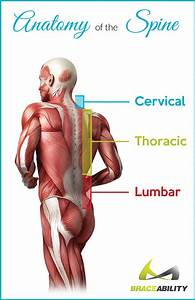 Back Pain In Your Thoracic Spine