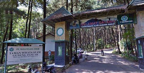 menikmati eksotisnya hutan pohon pinus  gunung pancar