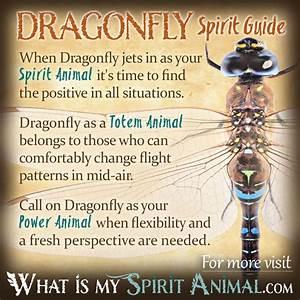 Dragonfly Symbolism & Meaning | Spirit, Totem & Power Animal