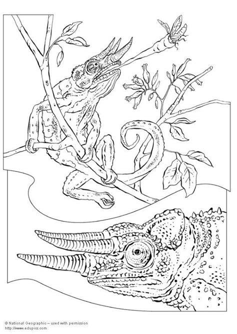 dibujo  colorear camalean img  images