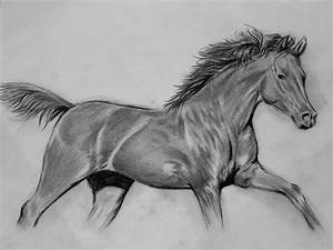 How to Draw a Realistic Horse Step by step Video for ...