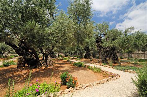 Garten Gethsemane (getsemanigatschmanim)  Israel Magazin