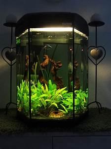 L Form Aquarium : eck aquarium neu und gebraucht kaufen bei ~ Sanjose-hotels-ca.com Haus und Dekorationen