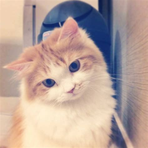 cute why cat