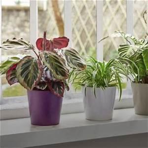 Grande Plante D Intérieur Facile D Entretien : pots et bacs r serve d 39 eau simplicit d 39 arrosage ~ Premium-room.com Idées de Décoration