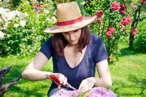 Hortensien Vermehren Wasserglas : hortensie endless summer vermehren so geht 39 s ~ Lizthompson.info Haus und Dekorationen