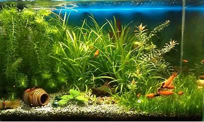 Wallpapers Aquarium Fish Tank Vacuum Cleaners Macbook