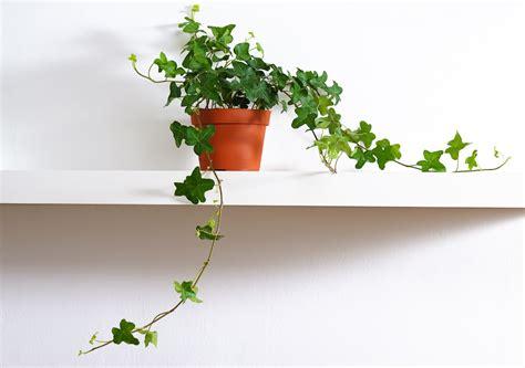 plante dans une chambre plante pour chambre liste ooreka