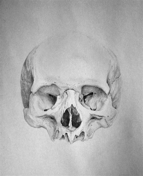 Human Skull Drawing Study Steve Toth Pinterest