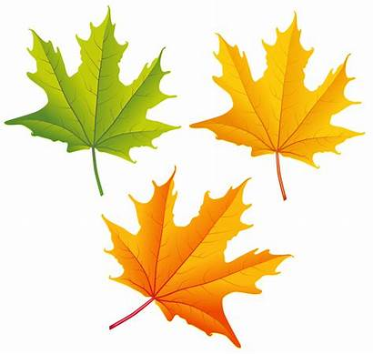 Leaves Autumn Clipart Clip Leaf Fall Yellow