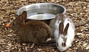 Kaninchenkäfig Für 2 Kaninchen : kaninchen co wassernapf oder nippeltr nke lindermanns tierwelt haustier magazin web tv ~ Frokenaadalensverden.com Haus und Dekorationen