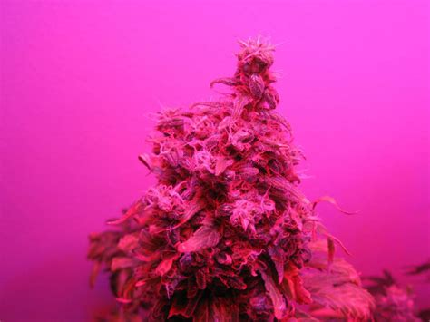 grow le led compare different grow lights grow easy
