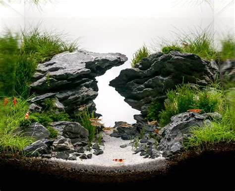Aquascaping Fish by Zigzag Gorge By Louis Nincsics Hac 2014 Entry