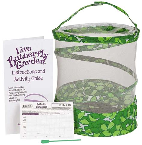 live butterfly garden insect lore live butterfly garden hatching kit for