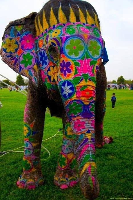 indian elephant  tumblr
