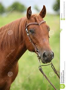 Quarter Horse Western Bridles With