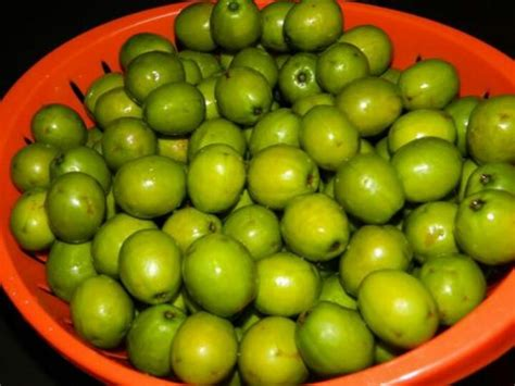 x cuisine indian plum is ah trini ting