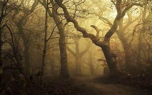 Mist, Landscape, Morning, Nature, Forest, Path, Leaves