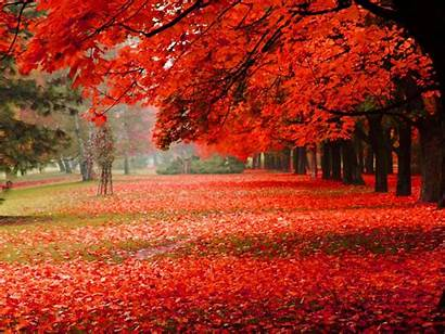Autumn Scenery Leaves Natural Park Definition 1freewallpapers