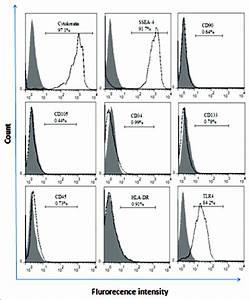 Phenotypic Characteristics Of Human Amniotic Epithelial