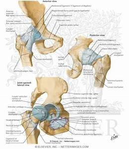8 Best Anatomy Of Hip Images On Pinterest
