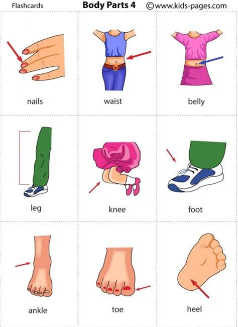 Free Printable Body Parts Flashcards  Bodyle Corps  Pinterest  Kids Pages, For Kids And