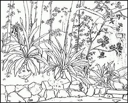 Coloring Nature Pages Adults