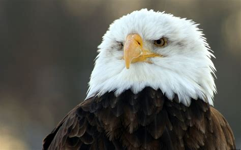 exotic animals bird pictures eagle amazing animal