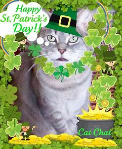 Cat Chat With Caren And Cody: Happy St.Patrick's Day!!