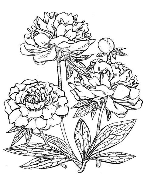 Peony Flower coloring pages. Download and print Peony