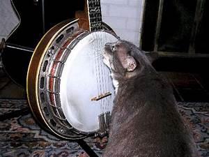 Good Saturday Moring - Discussion Forums - Banjo Hangout