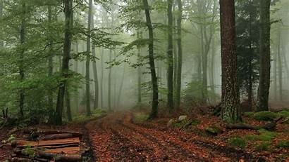Foggy Forest Wallpapers Fog Nature Wide Backgrounds