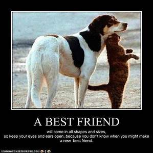A best friend is .... | Funny Animal Photo