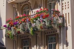 Ideen Zur Balkongestaltung : balkonpflanzen die sch nsten ideen zur balkongestaltung ~ Markanthonyermac.com Haus und Dekorationen