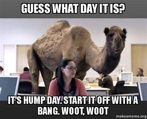 Hump Day Memes - hump day camel meme