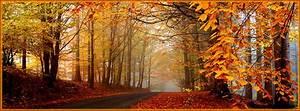 Autumn Road Facebook Covers, Autumn Road FB Covers, Autumn ...