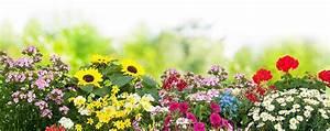 Was Kann Man In Ein Gewächshaus Pflanzen : blumenbeet anlegen vorbereiten einpflanzen ~ Lizthompson.info Haus und Dekorationen