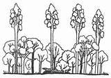 Drawing Getdrawings Rainforest Trees sketch template