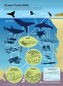 Impact Of Ocean Acidification On Marine Food Webs