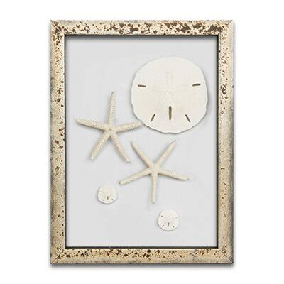 24 w x 24 h x.5 d we've recreated one that would look great on your patio. Large Sand Dollar Wall Decor | Wayfair