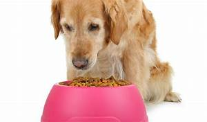 top 20 best senior dog food brands for health and With best senior dog food