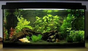 Liter Berechnen Aquarium : mein zuk nftiges 54l garnelenbecken aquarium forum ~ Themetempest.com Abrechnung